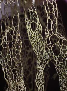 foliage: lace lichen